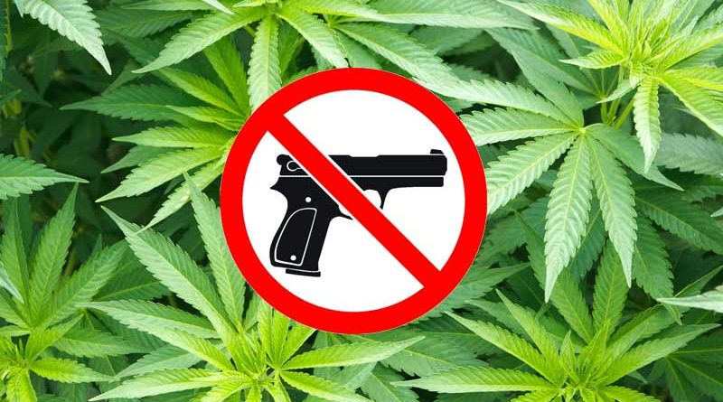 Can medical marijuana users have firearms? Police say…