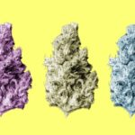 New Study: All Marijuana Strains the Same (but there's a catch)